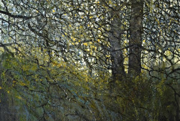 colin merrin 2016 new forest tracery
